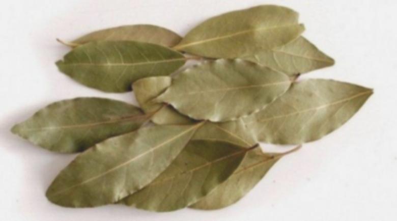 Астма се потиска само с дафинов лист