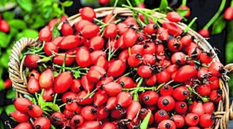Сок от тази билка лекува възпаление на бъбреците