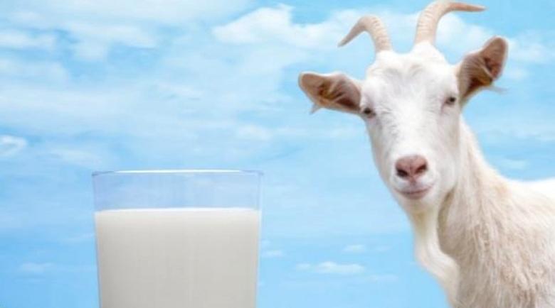 Козето мляко спасява от диабет