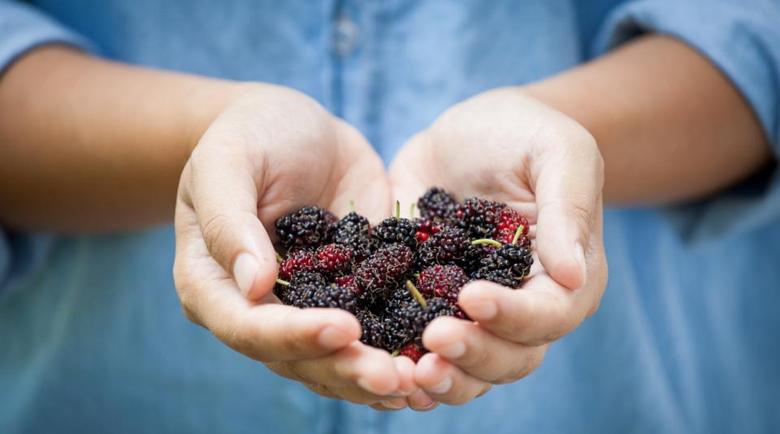 Сезонът на черниците: Kакви са здравословните ползи от вкусния плод
