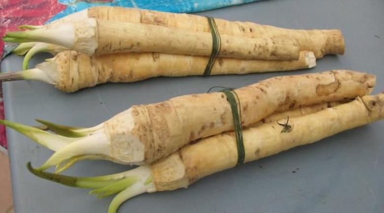 Лечебни рецепти с хрян – за какво помага пикантният корен?