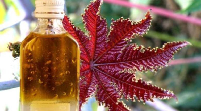 Рициново масло при екзема и акне, болен черен дроб и възпалени стави