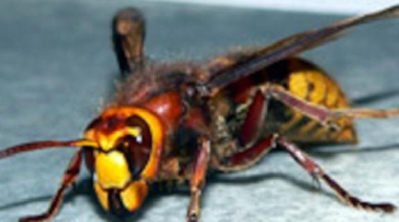 Ужилвания и ухапвания от насекоми – с какво да си помогнем?
