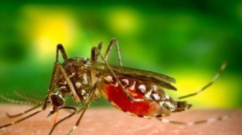 Комарите са по-опасни за хората с нулева кръвна група