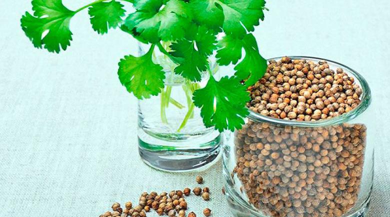 Кориандър при алергия, болни венци и чернодробни проблеми