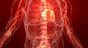 Кардитът е възпаление на сърдечния мускул