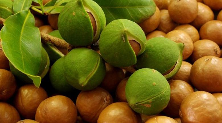 Ядката макадамия – полезна за здравето и красотата