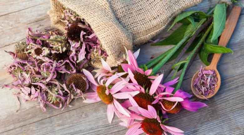 Есен е… 4 билки, които ще подсилят имунната ви система