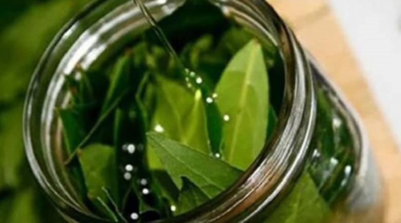 Билка и лековито масло, които ги няма в аптеката – зехтин и дафинов лист