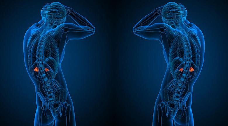 Кои билки поддържат здравето на надбъбречните жлези?