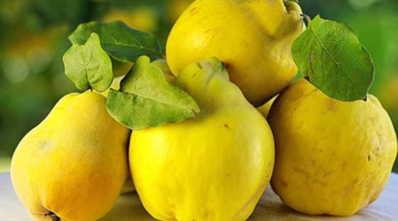 Жълтата дюля – богата на пектин, само 38 калории и много витамин В