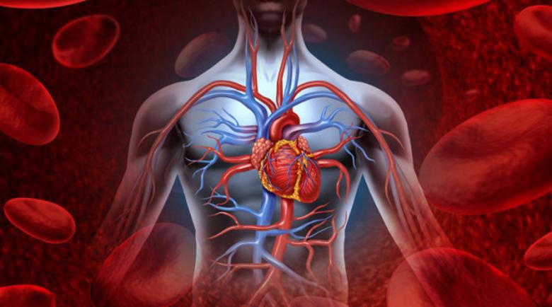 Здраво ли е сърцето ви? Бърз и точен тест