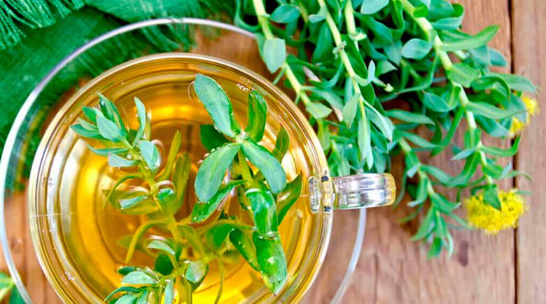 Златен корен защитава черния дроб, артериите и подобрява паметта