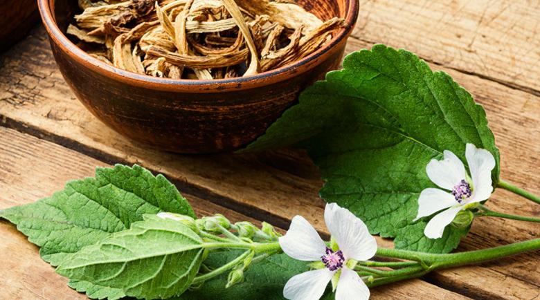 Корен от бяла ружа при киселини и язва, бронхит, екзема и дерматит