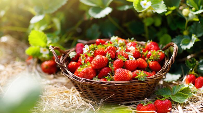 Сезонните плодове: Ягодите намаляват риска от рак и инсулт